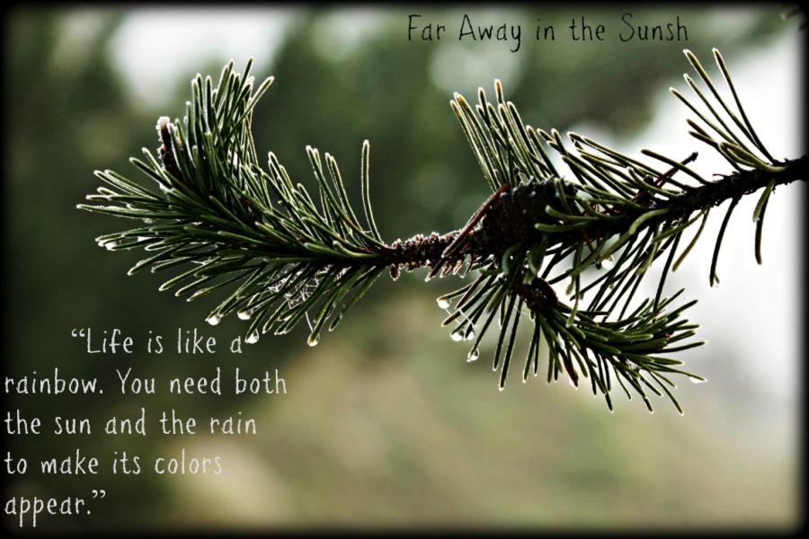 Rain Drop and Pine Needles