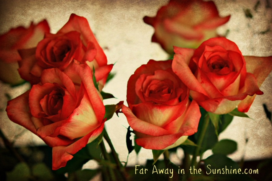 Roses for Peace