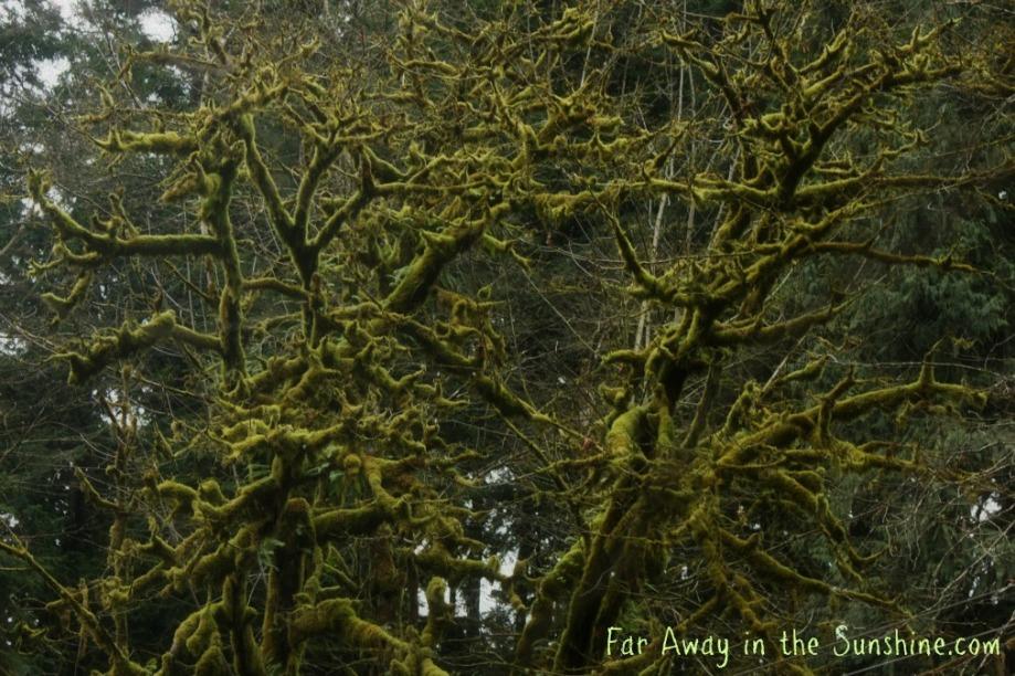 Fuzzy trees