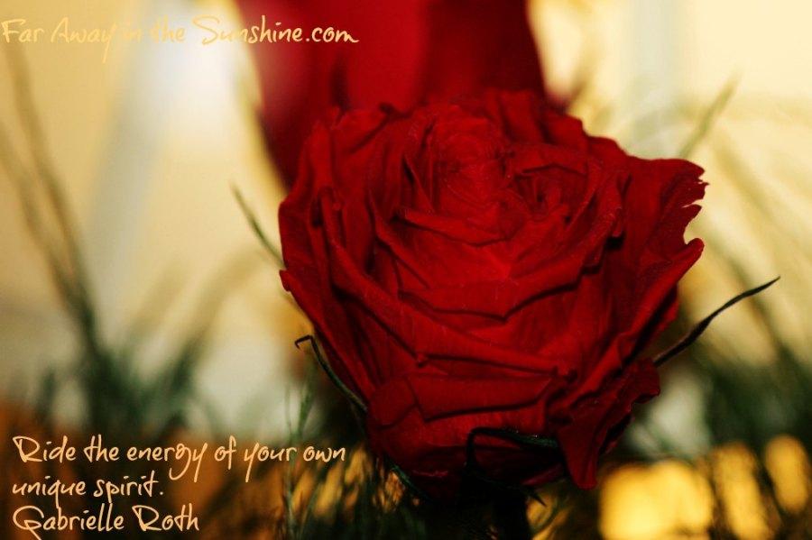 Rose in light