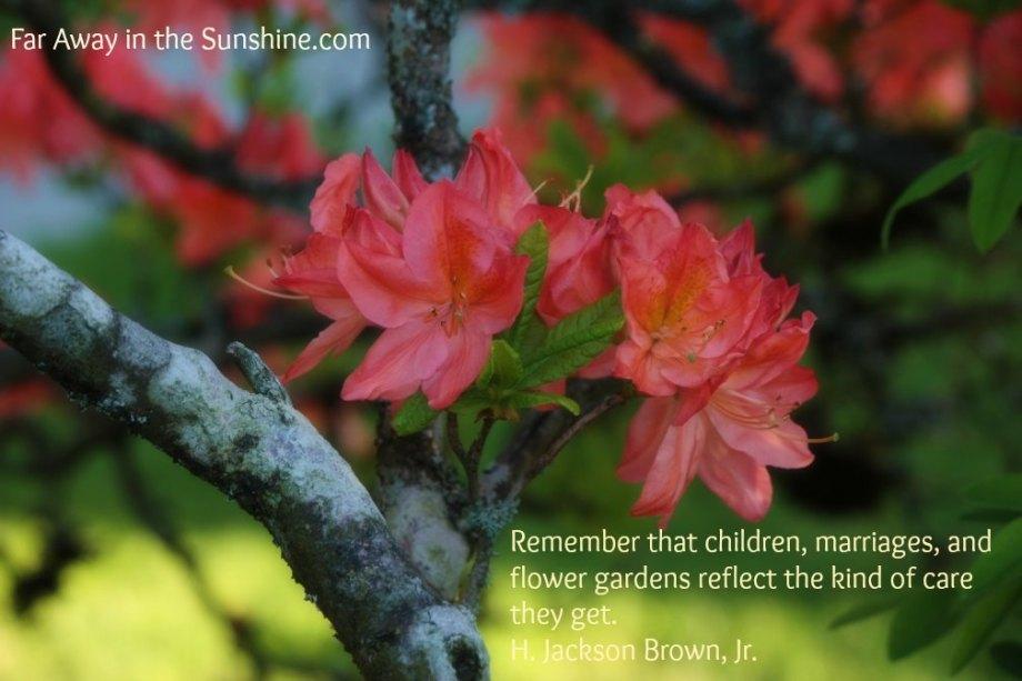 Flowered branch