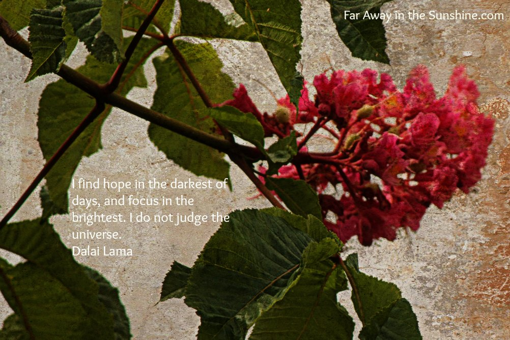 Hope on branches
