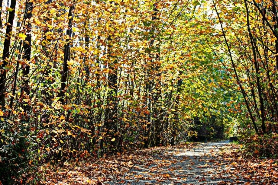 Nature walks