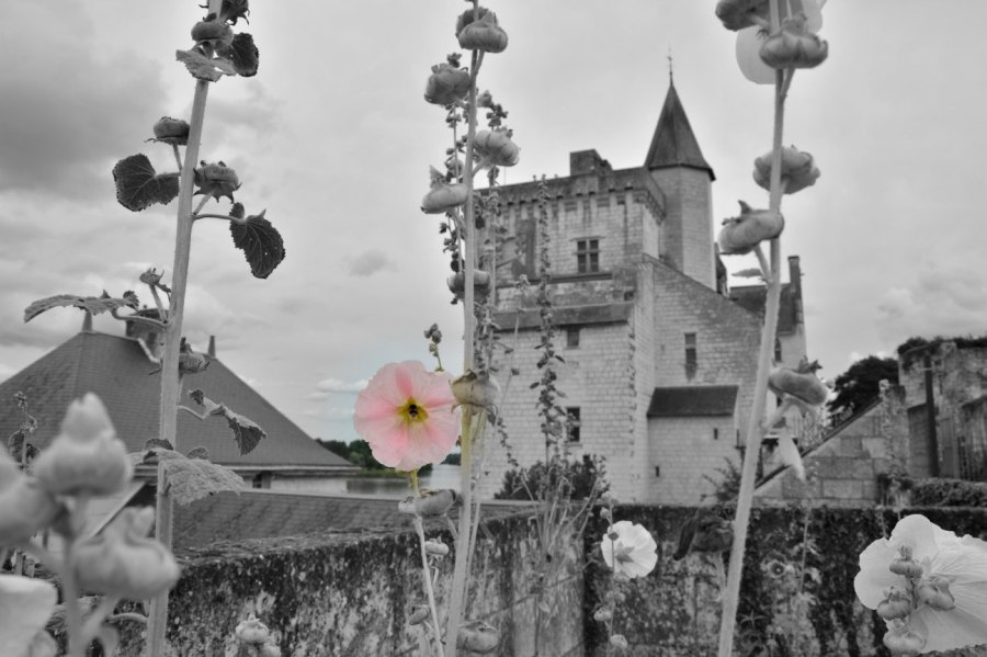 Flower on castle