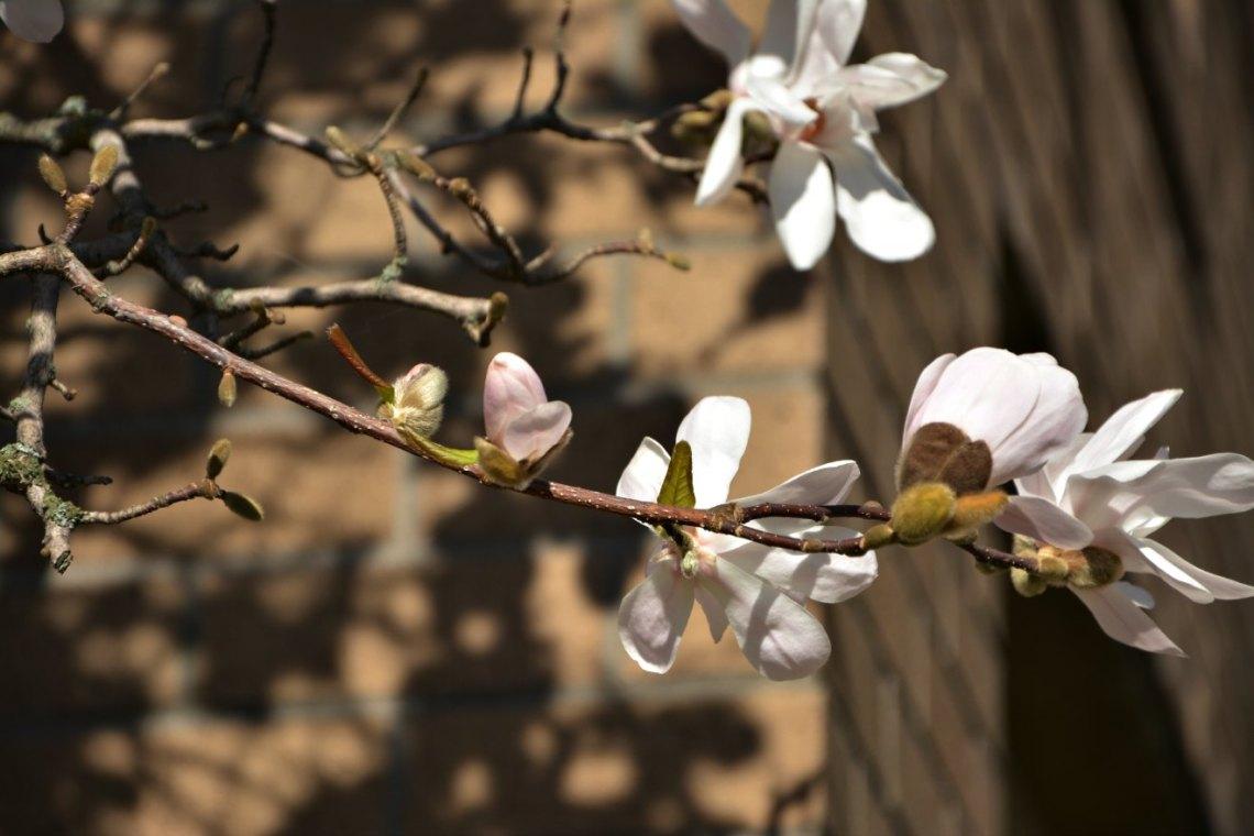 March's beauties